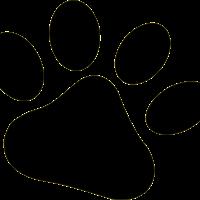 jelena sasic